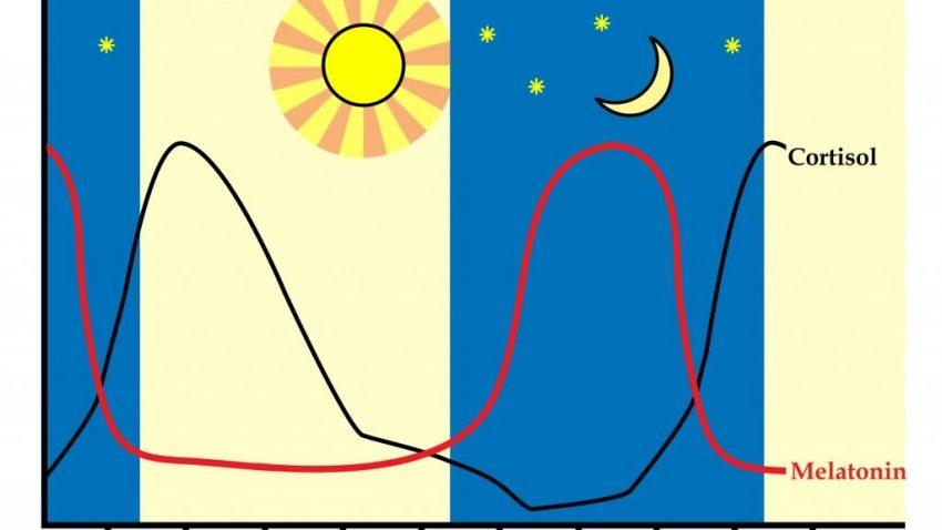 cortisol-melatonine-rythme-circadien